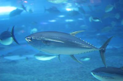 Canon EF50mm F1.8 II のEOSKissでの水族館撮影サンプル