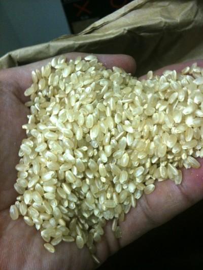 無人精米所玄米の様子