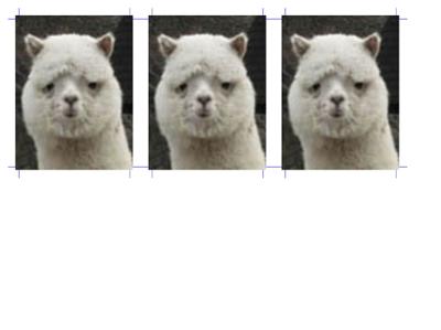 パソコンで履歴書・パスポート・免許証用の証明写真を作る方法